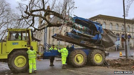 The tree being moved