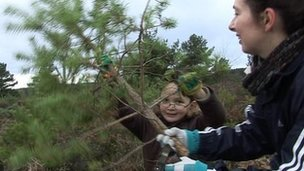 Heathland conservation work
