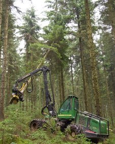 Timber cutting