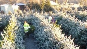 Keele Christmas Tree Farm