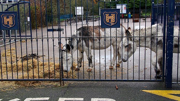 The donkeys were kept at Little Heath Primary School