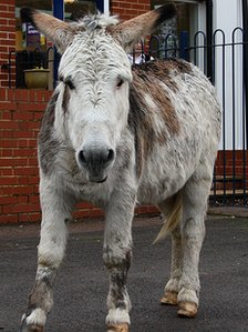 Donkey at Little Heath Primary School