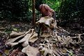 Elephant bones  found in the forest outside Sounga village in the Gamba district, Gabon.