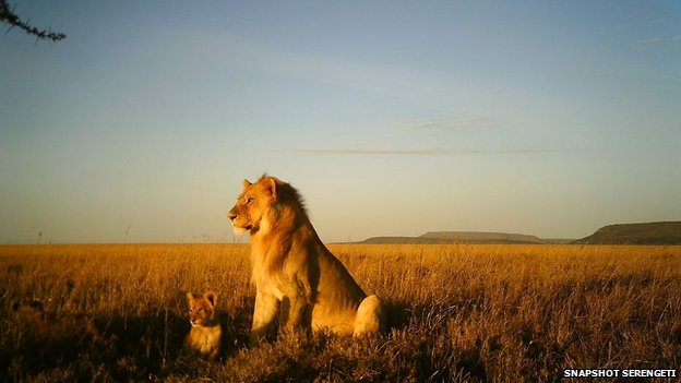 Lion and cub in the Serengeti National Park