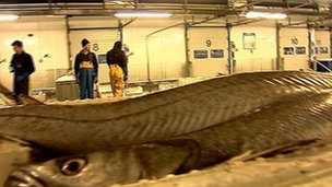 Peterhead fish market