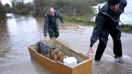 People rescue chickens from flooding in Gloucester