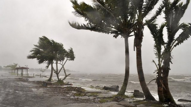 Wind lashing trees on coast