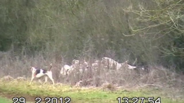 Dogs on the Heythrop Hunt