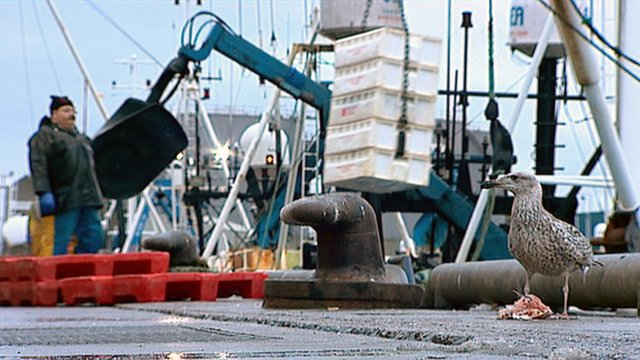 Fishing boat lands a catch in harbour