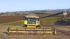 Combining beans at Humshaugh, Northumberland