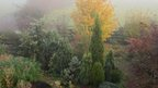 Autumn garden in the fog at Gainford