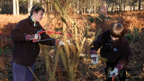 Two boys cut down gorse bush