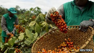 Workers harvest guarana fruit at a farm in Maues, 160 miles (256km) east of Manaus, in the Brazilian Amazon, 1 December 2012