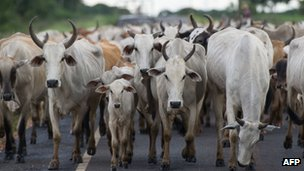 Cattle in the state of Mato Grosso - file photo