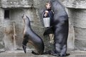 A zoo keeper and two sea lions