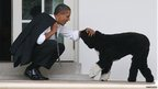 Barack Obama and Bo the Portuguese waterdog