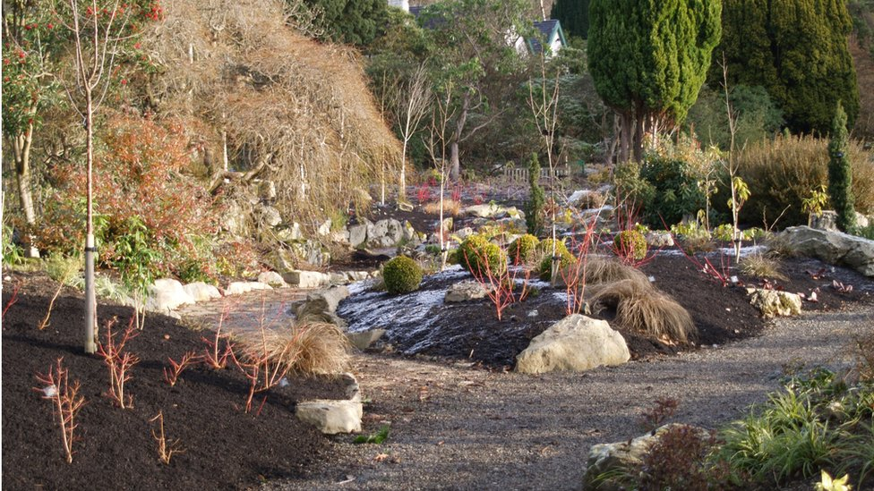 BBC News - Bodnant Garden's winter opening to Conwy visitors