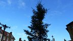 Blue sky over Christmas tree in Malton