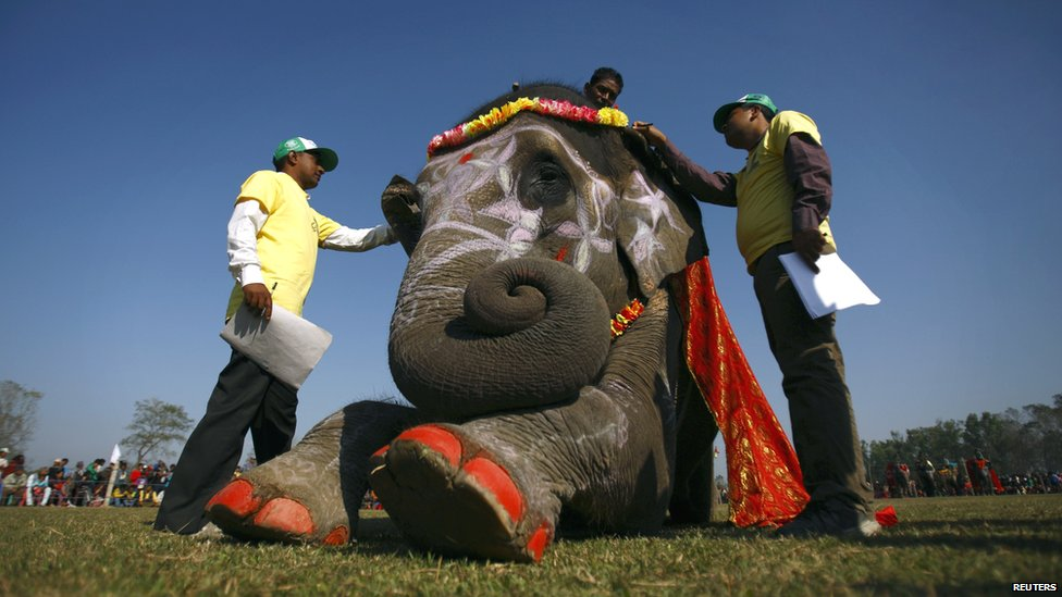 Nepalese judges examining a decorated elephant taking part in a beauty contest - Chitwan, Nepal - 27 December 2012