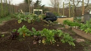 Nigel McKinney's vegetable plot
