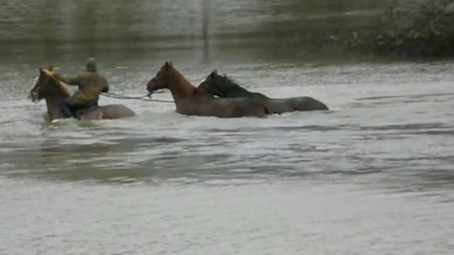 Watch the horses being rescued...