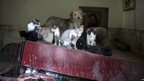 Cats and a dog balance on overturned furniture in a house in Xerem, Rio de Janeiro state.