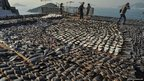 Shark fins drying in the sun cover the roof of a factory building in Hong Kong