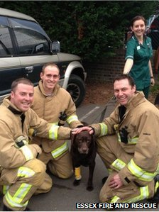 Essex firefighters with one of the dogs rescued from the surgery