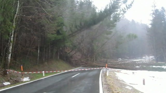 Trees fall amid Austria landslide