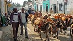 Donkeys on a road in Harar, Ethiopia (Photo: BBC News website reader Myke Gerrish)