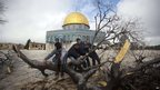 Fallen tree near the Al-Aqsa Mosque compound, Jerusalem, on 7 January 2013