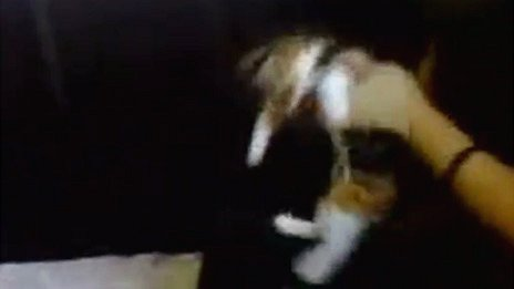 still from mobile-phone footage of cruelty to kitten