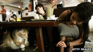 Customers at a cafe in the Causeway Bay district of Hong Kong play with one of the many cats littering the restaurant