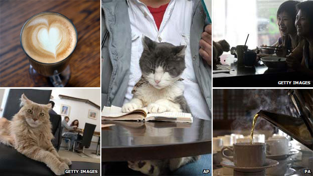 Cats in cafes