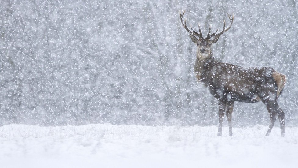 snow photos: