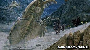 Cambrian creatures illustration