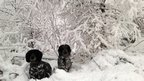 Two black and white dogs in the snow. Snow covered trees and branches behind them.