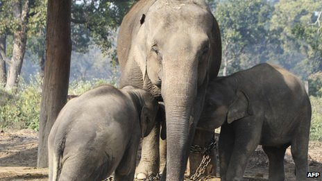 Elephants in Chitwan National Park