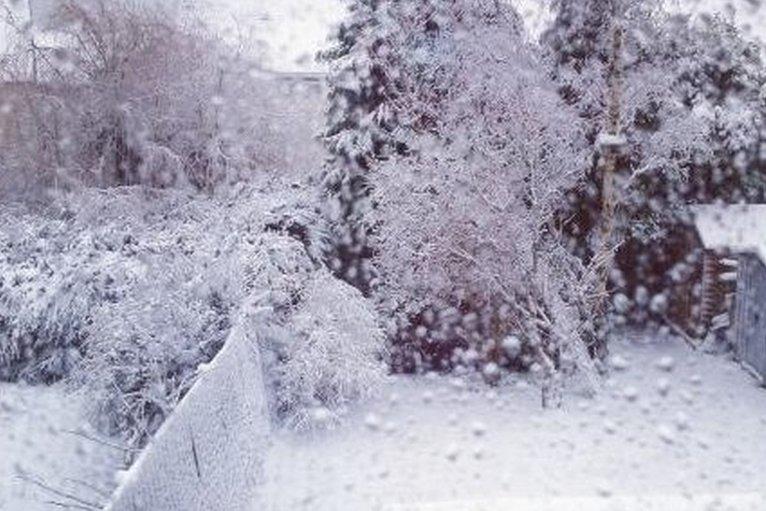 Snow At