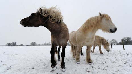 Horses graze in a field in Oakley, Suffolk