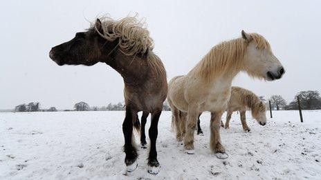 Horses graze in a field in Oakley, Suffolk