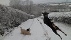 Dogs in snow. Photo: Ellie Howells