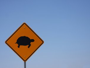 Turtle road sign
