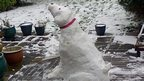 Emily&#039;s snow dog