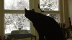 Cat looks out to a snowy garden