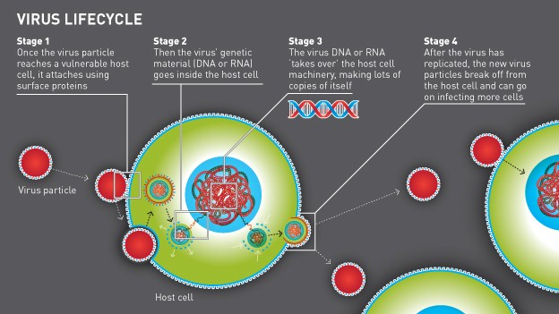 Diagram showing the life cycle of a virus