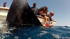 Ben Jones from The Deep implanting an acoustic tag on a manta ray