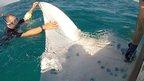 Measuring a manta ray