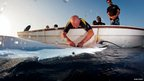 Graham Hill fitting an acoustic tag to a manta ray