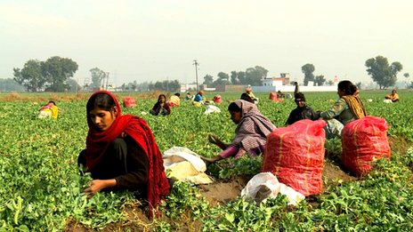 Farm workers in Punjab